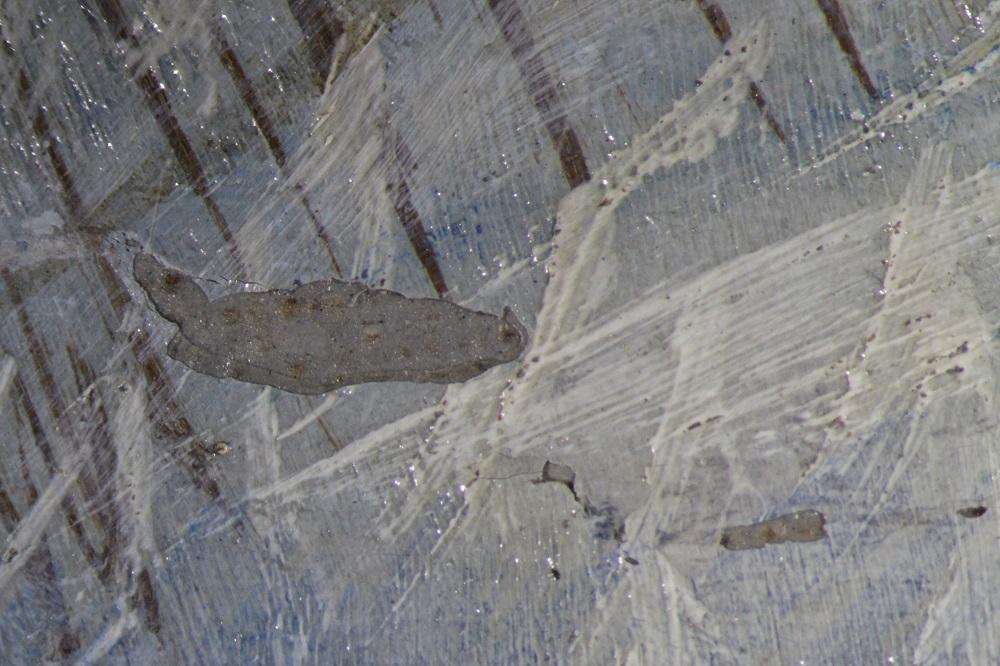 Bianka Floss Restaurierung Konservierung konserviert Johannes Holst Marine Malerei Gemälde Fehlstelle Internationales Maritimes Museum Hamburg Deck 8
